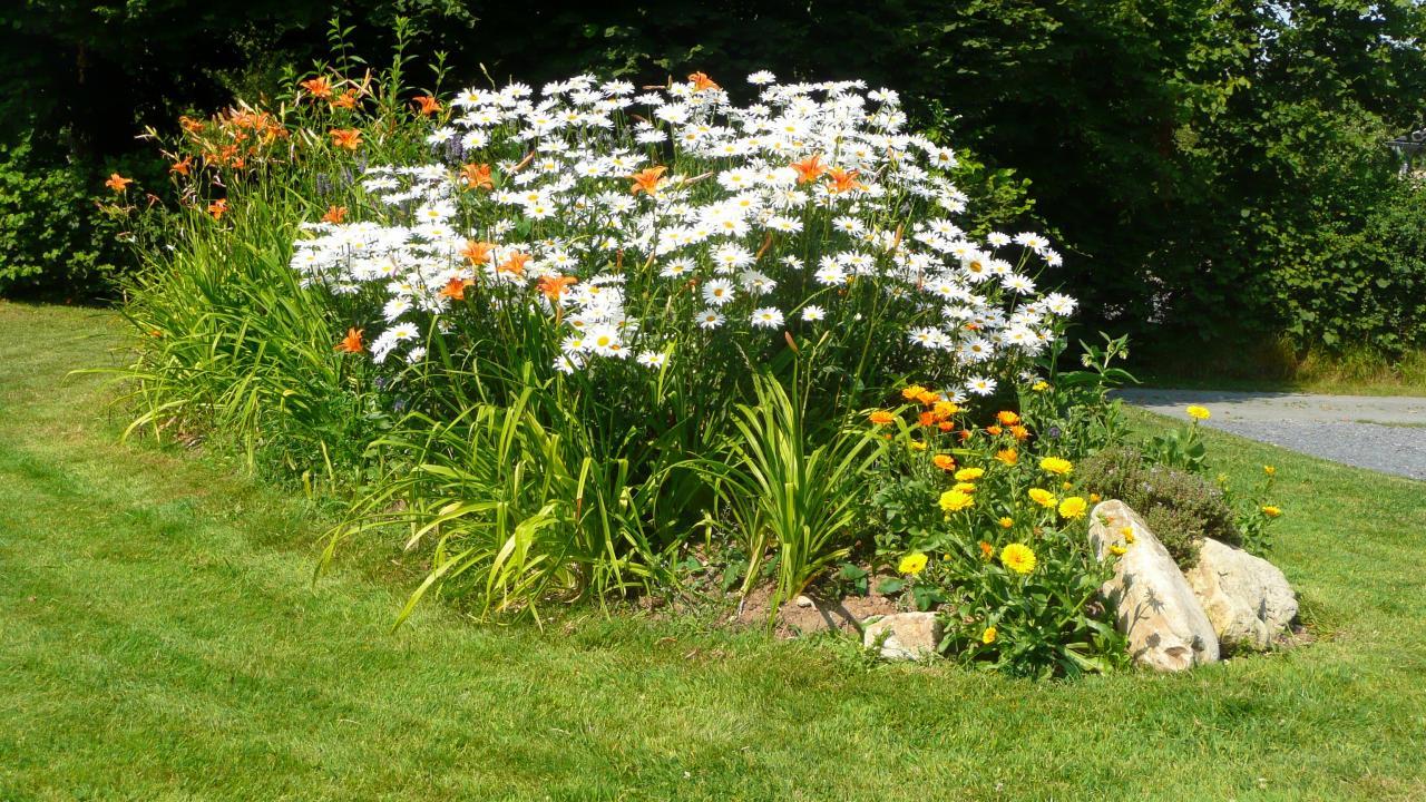 L'ilôt fleuri en été